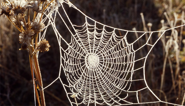 The Magnificence of Spider Silk
