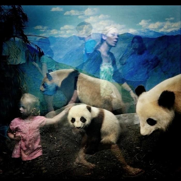 01-Panda-NH
