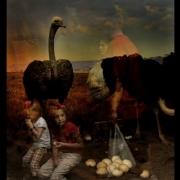 02-Ostrich2-NH