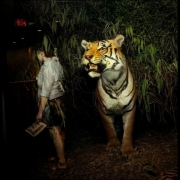 03-Tiger-NH