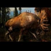 05-Moose-NH