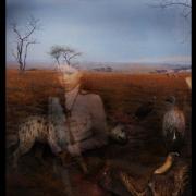 14-Hyenas-NH